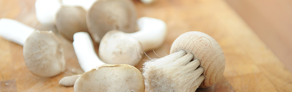 http://www.jilltaylorconsulting.com/wp-content/uploads/2015/03/mushrooms-613161_1920.jpg